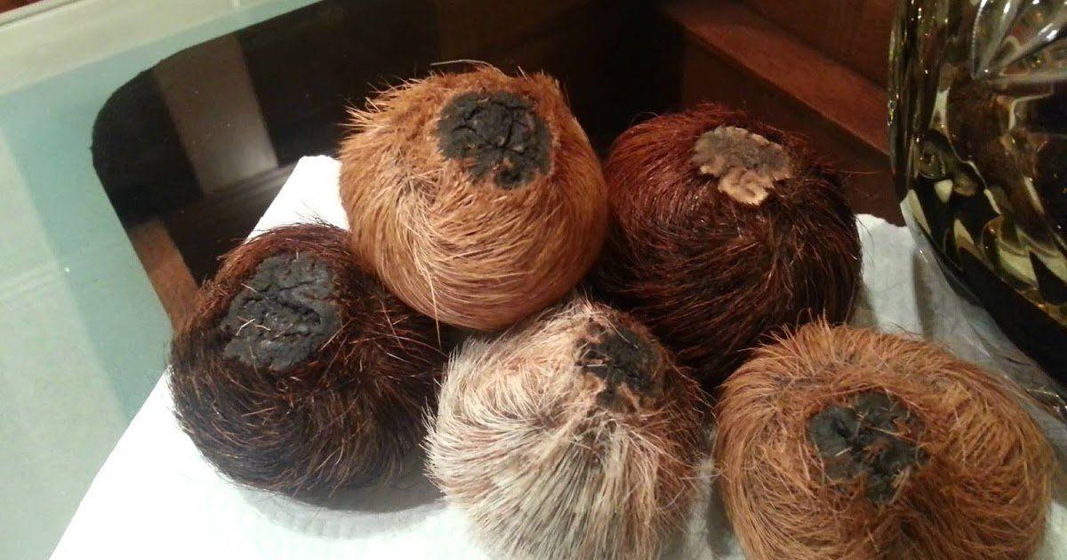 معلومات عن غزال المسك الاصلي وسعره بالسعودية موسوعة Fitness Beauty Vegetables Food