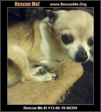 Georgia Chihuahua Rescue Adoptions Rescueme Org Chihuahua