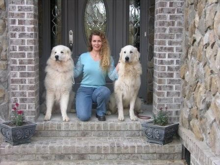 Aegys Kuvasz This Is The Breeder My Daphne Came From Kuvasz I
