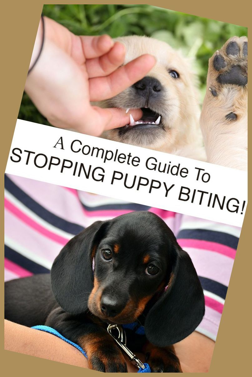 Discover Why Your Canine Loves To Chew And How To Keep Him From