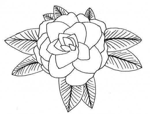 how to draw a camellia Camellia