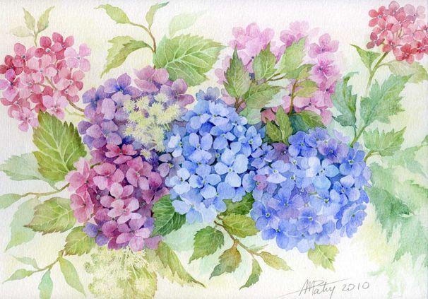 Hortensia Fleurs Peintes Peindre Un Tableau Aquarelle Fleurs