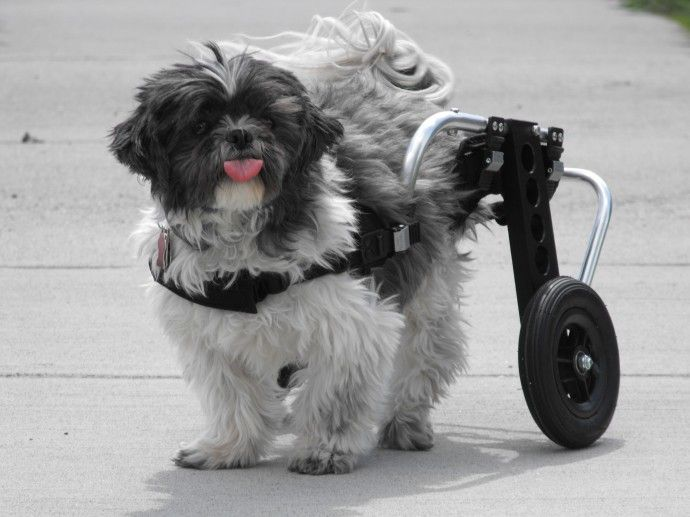 "Wheelchairs for Handicapped Dogs | Hand Built Quality by Ruff Rollin | ""Buddy"""