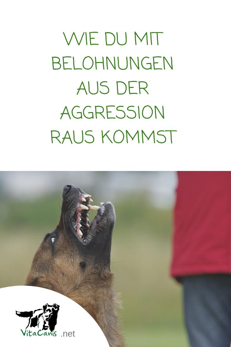Mit Belohnung Raus Aus Der Aggression Vitacanis Aggressive Hunde Hundeerziehung Hundchen Training
