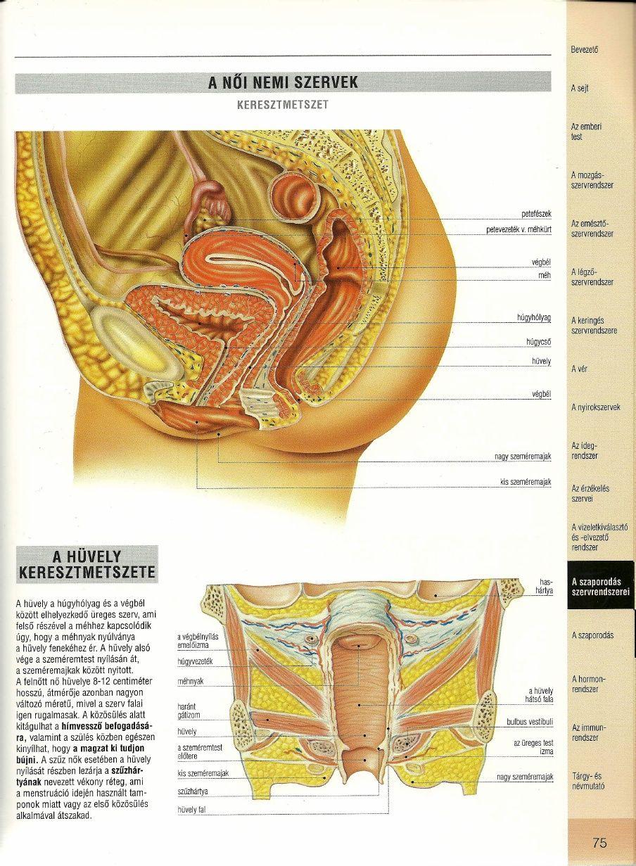 Orvosi anatómiai atlasz