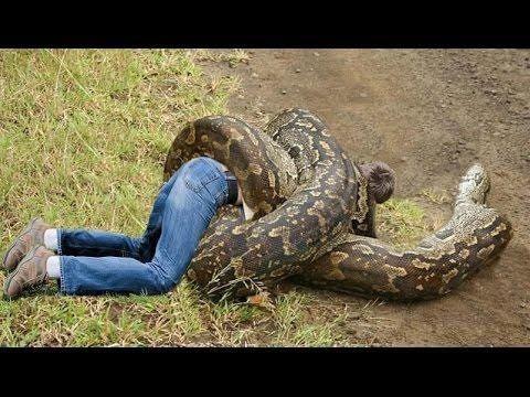 Full Documentary Animals - Giant Snake Attack Human ...