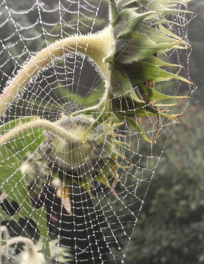 Cobweb Toiles Givre Et Petits Jardins # Palette Jardin De Givre