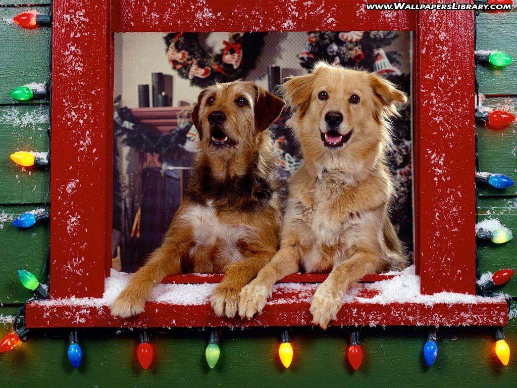 Download Christmas Dogs Wallpaper, 'Christmas Gift And Dog ...