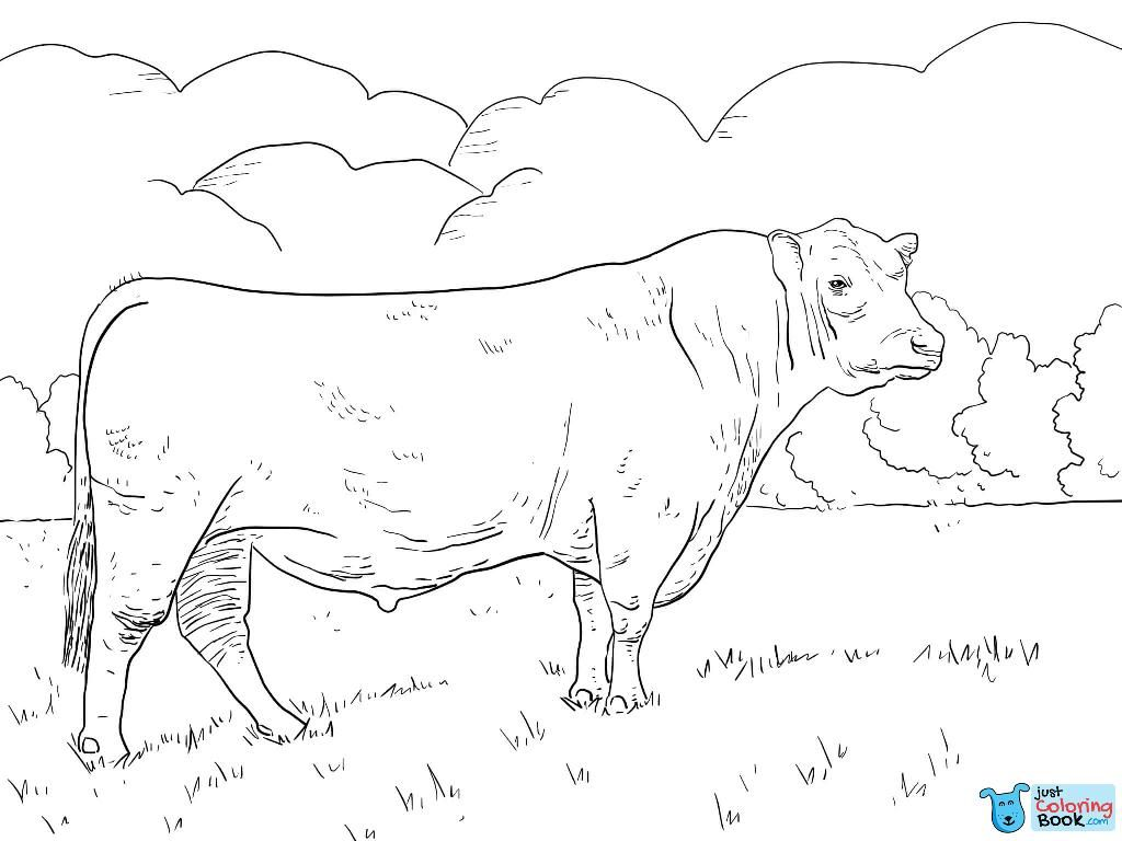 Angus Bull Coloring Page Free Printable Coloring Pages Intended