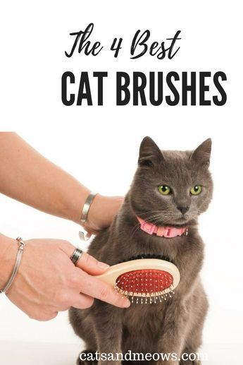 1f4f774897776677b160932b1de9a143 - How To Get Rid Of Matted Hair Clumps On Cats