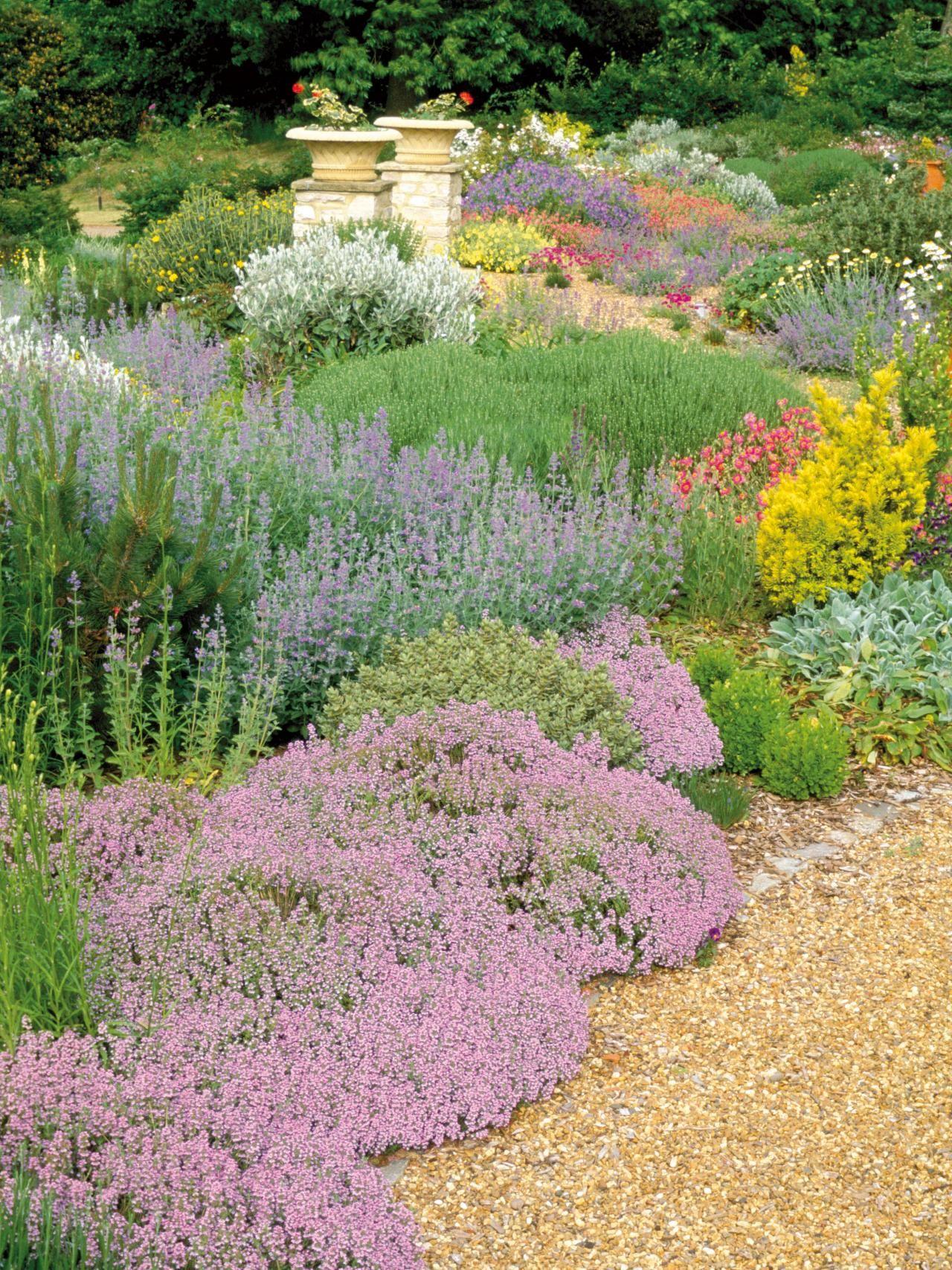 Great Groundcovers Garden Design Dry Garden Plants 640 x 480