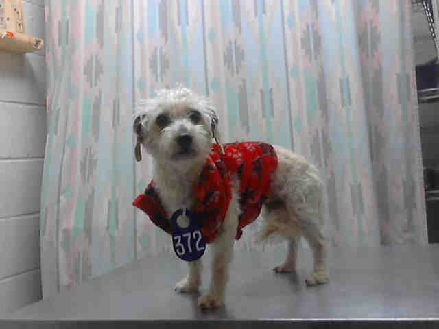 Pepper Houston Texas Petharbor Com Animal Shelter Adopt A Pet Dogs Cats Puppies Kittens Humane Socie Animal Shelter Animals Humane Society