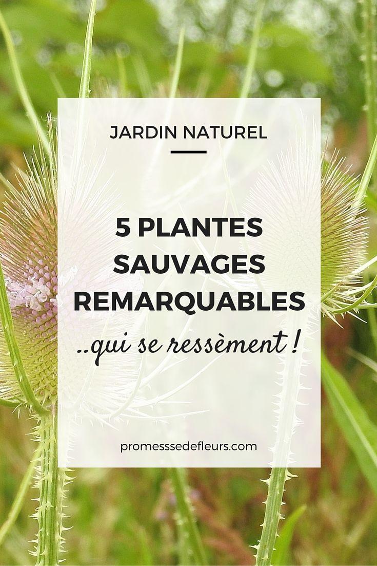 Mauvaises Herbes Comestibles De Nos Jardins