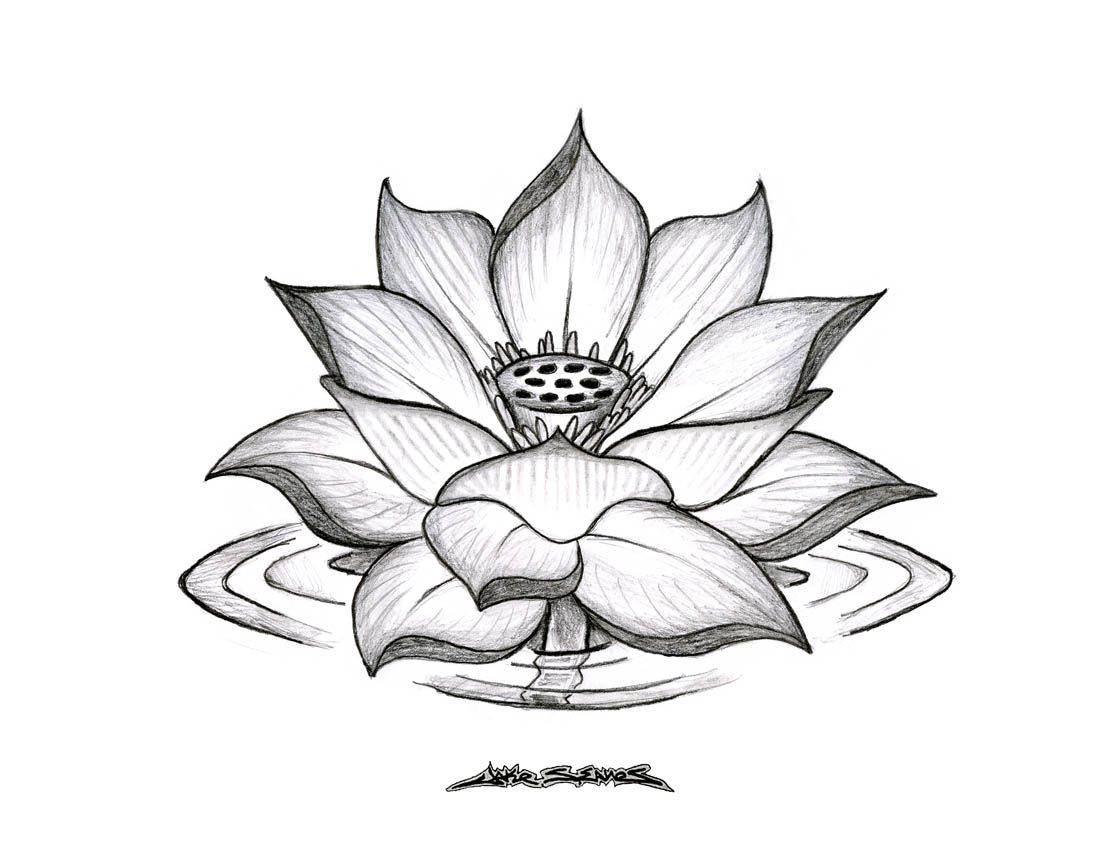 Pencil Sketches Lotus Flower 1000 Images About Lotus Flowers On