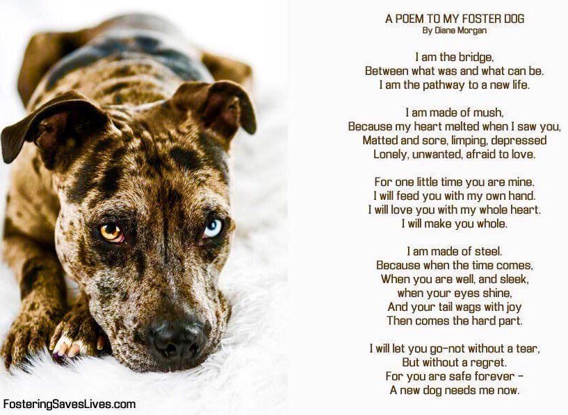 Fostering Is Wonderful A Poem To My Foster Dog Foster Dog