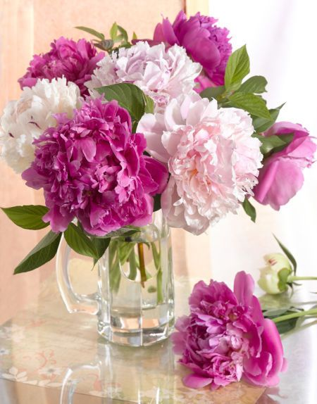 the curious bumblebee house flowers peonies