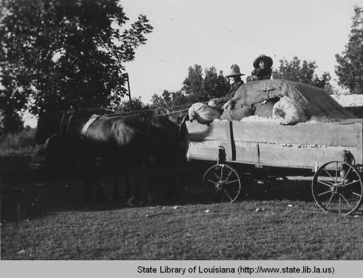 Waiting in horse drawn cart at cotton gin at Melrose Louisiana :: State Library of Louisiana Historic Photograph Collection
