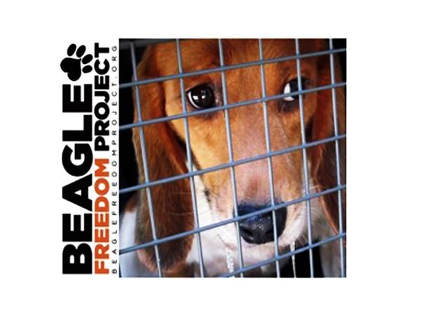 Shannon Keith Beagle Freedom Project Rescuing Laboratory