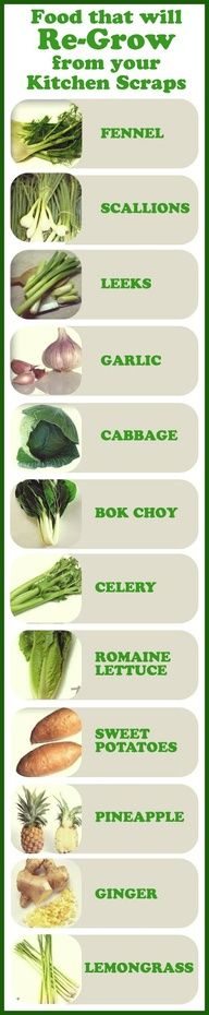 Permaculture Ideas: Foods that will Re-Grow from your Kitchen Scraps  @Michele Couture