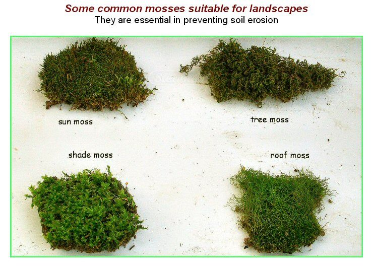 Moss types google search moss garden pinterest moss garden air plants and gardens for A gardener is planting two types of trees