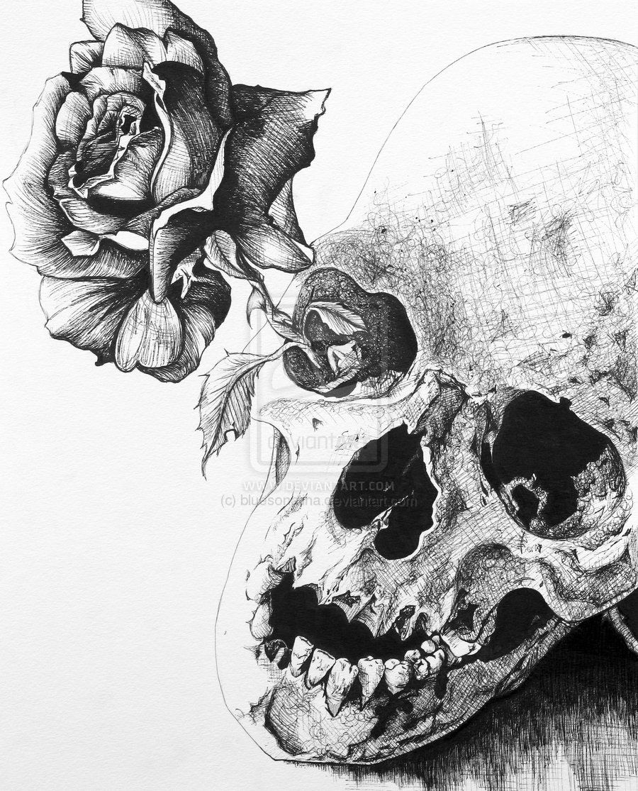 dark rose sketch | black rose by bluesonatina traditional art drawings other 2010 2013 ...