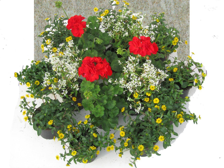 Grabbepflanzung Set Sommer- Kreis