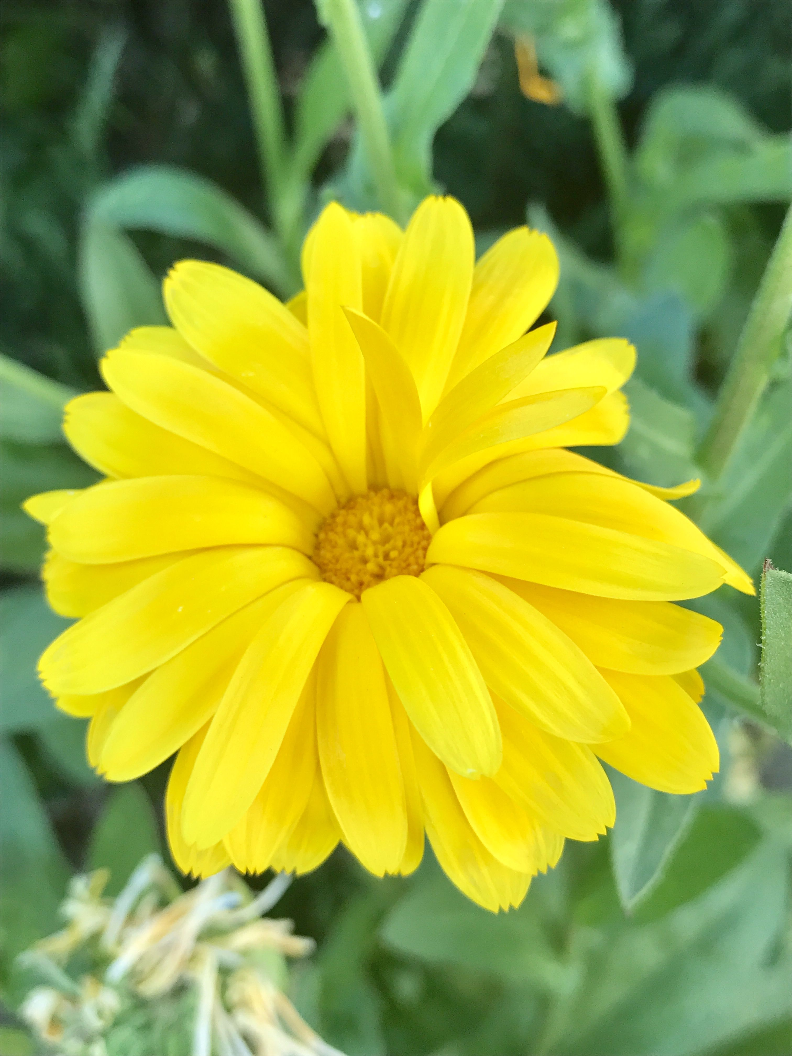 Pretty Yellow Flower Photography My Own Pinterest Photography
