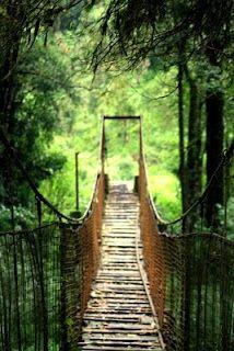 d bridge less taken!