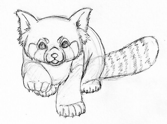 red panda just an example of position i want it in it  Tattoos I