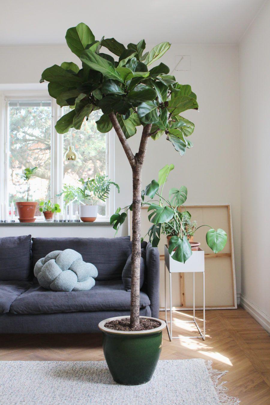 historien om v rt inomhustr d pinterest plantes idee deco table et plante interieur. Black Bedroom Furniture Sets. Home Design Ideas