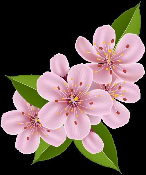 Spring Cherry Blossom Flowers Png Clip Art Image Cartoon Blumen Wie Man Blumen Malt Blumen Kunst