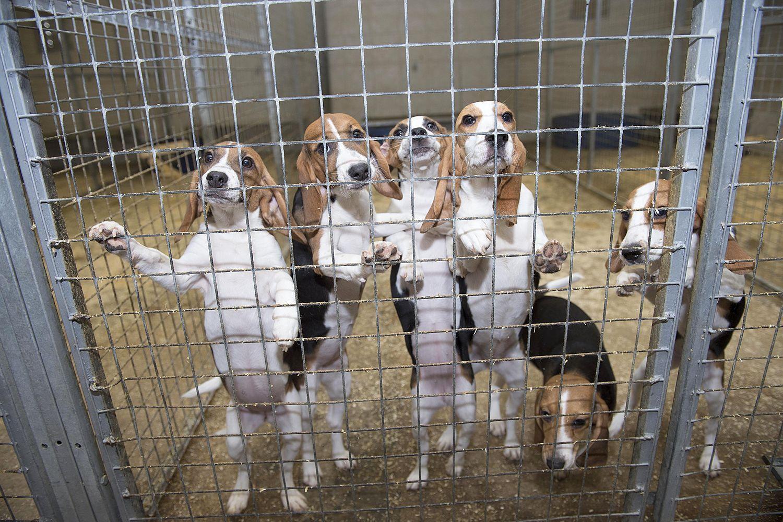 Pin On Stop Animal Cruelty