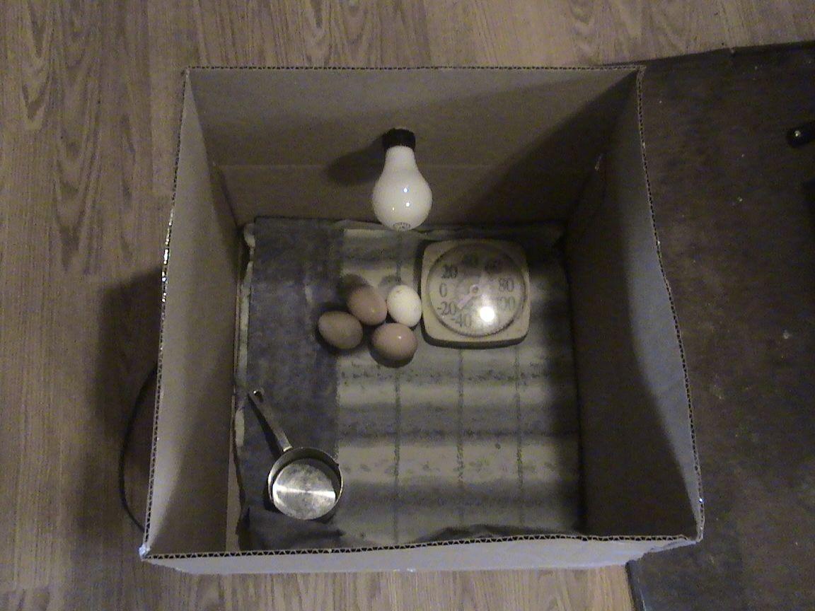 Como Construir Una Sencilla Incubadora Para Pollos Con Una Bombilla Electrica Incubadora De Huevos Incubadora Como Construir