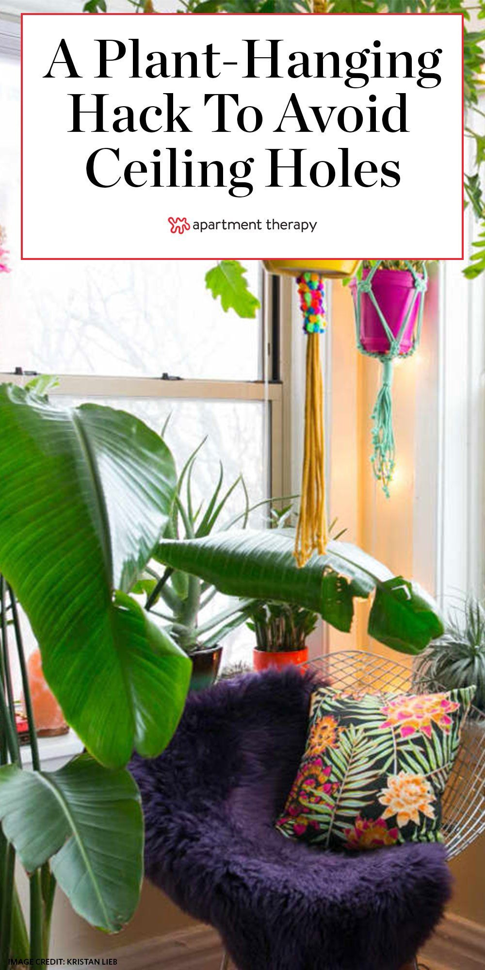The Renter Friendly Solution for Hanging Plants Without ...