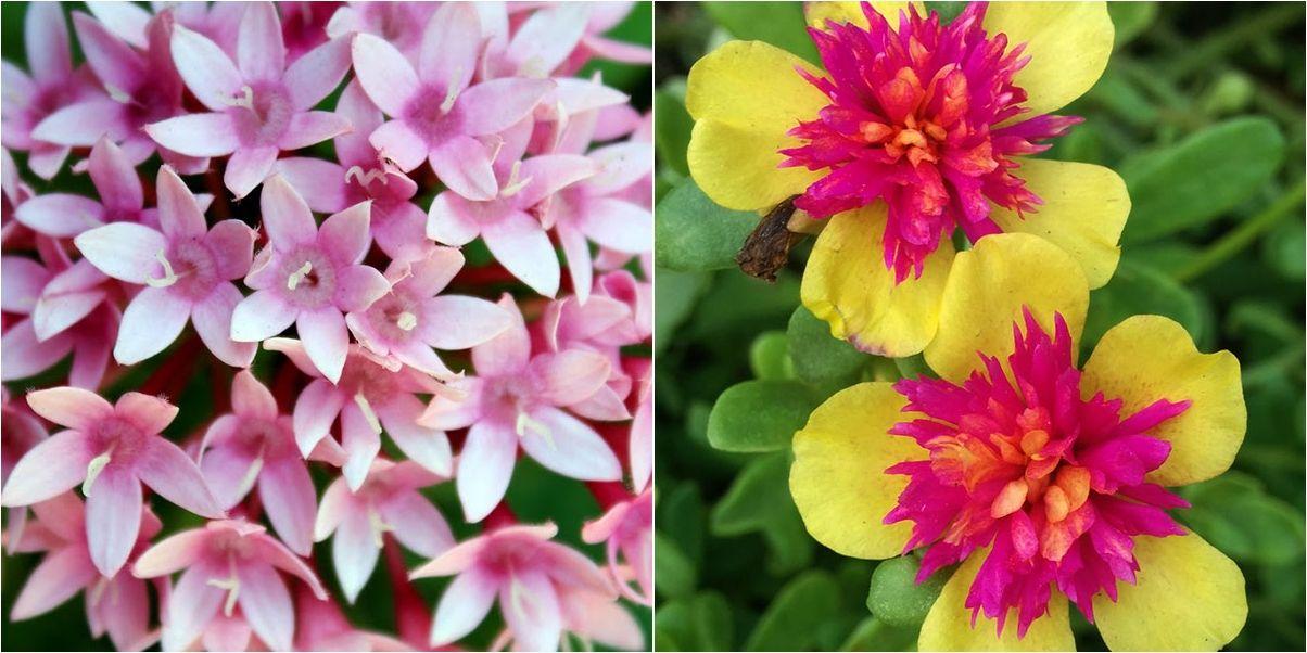 8 plantas que florecen todo el año en macetas ¡increíbles