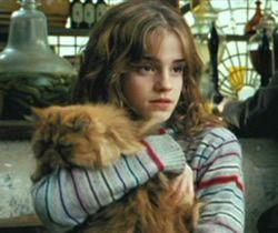 Crookshanks - Harry Potter Wiki  |Harry Potter Hermione And Crookshanks