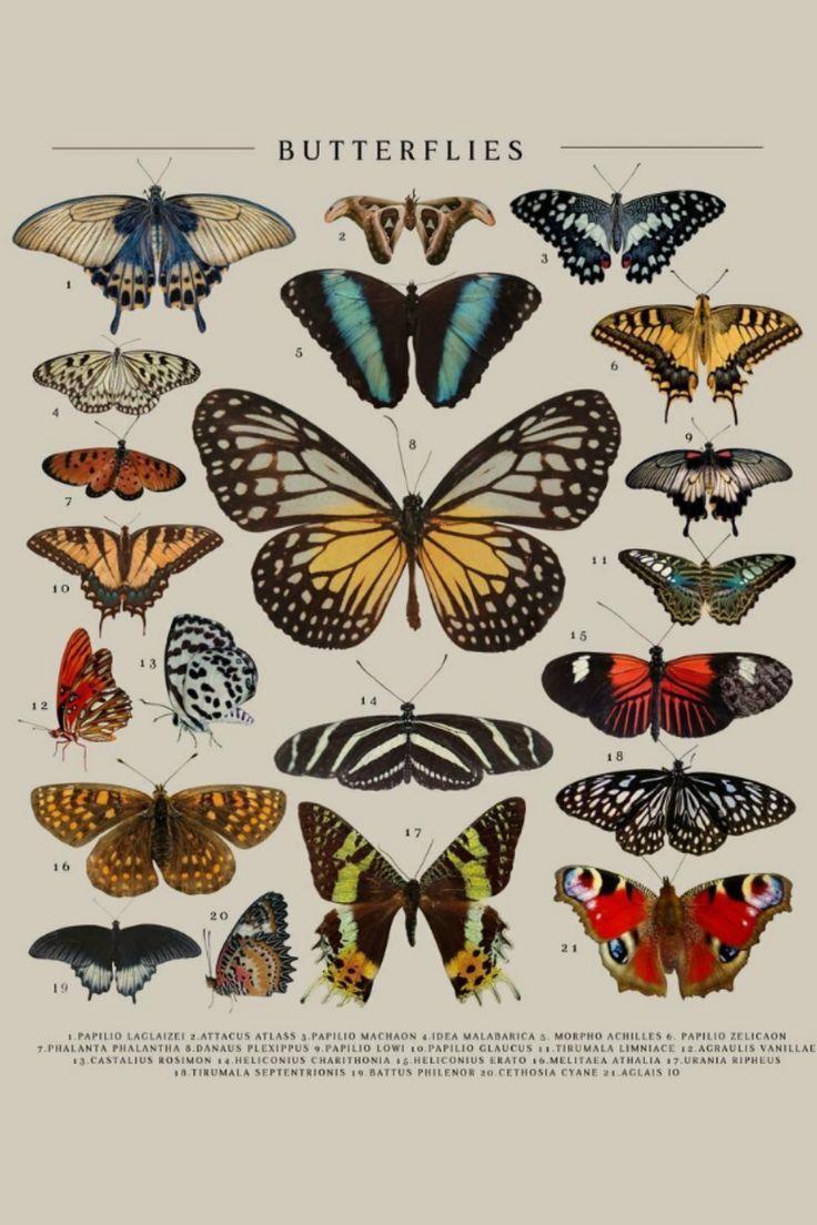 Butterflies types poster by Simon Darren thumbnail