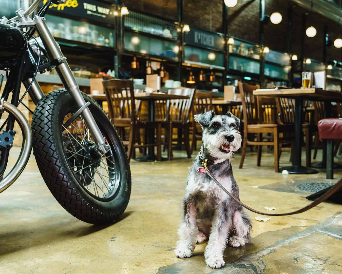 My Dog Friendly London By Rusty Red The Schnauzer Dog Friendly Shoreditch And Hoxton Bike Shed Dog Friends Schnauzer Dogs Dogs