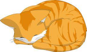 Картинки по запросу кошка спит рисунок