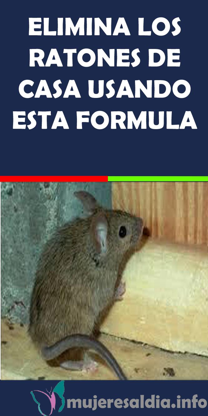 Como Acabar Con Las Ratas En El Campo Imagen De Beatriz Gaviria Arroyave En Beatriz Gaviria Arroyave