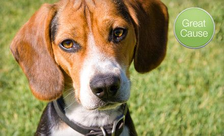 10 Donation To Help Feed Fostered Beagles Beagle Dog Breed