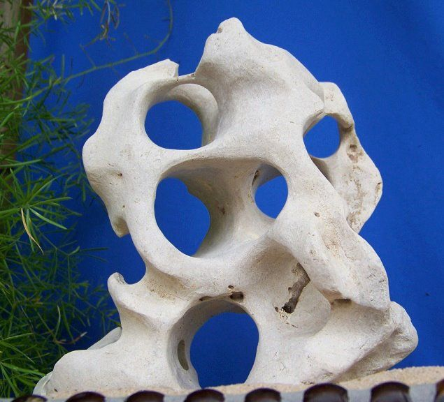 Wow. Beautiful Texas Limestone Holey Rocks. For an aquarium, Yes. The fishes would love it! Lets see, it would also make a great door-stop; Or a beautiful addition to a shelf in your home, or in your garden.  www.facebook.com/...  or  myworld.ebay.com/...