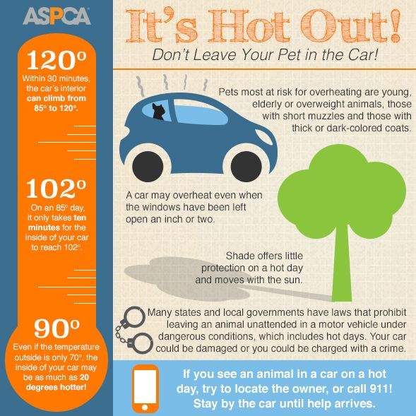 Download And Share Our Hot Weather Infographic To Prevent Pets From Suffering In Hot Cars Pets Your Pet Pet Safety