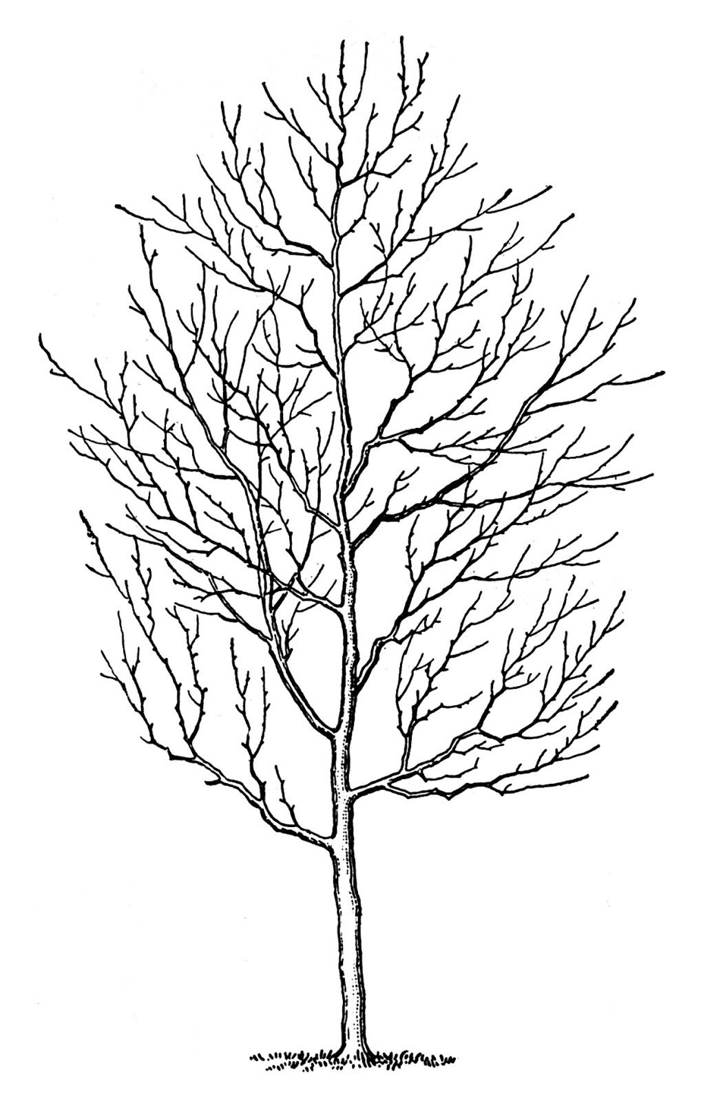 4 Winter Tree Images Spooky Tree clipart Tree images