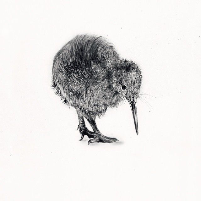 #mulpix Tattoo Commission Kiwi Bird Drawing #kiwi #bird #kiwibird #drawing #drawings #sketch # ...