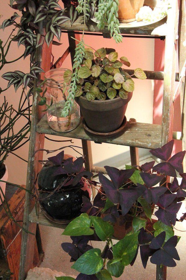 katrine and peter 39 s boston loft pflanzen f r mein zuhause plants i love pinterest. Black Bedroom Furniture Sets. Home Design Ideas