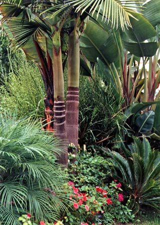 King palms and sago palms along entryway san diego for Tropical low maintenance plants