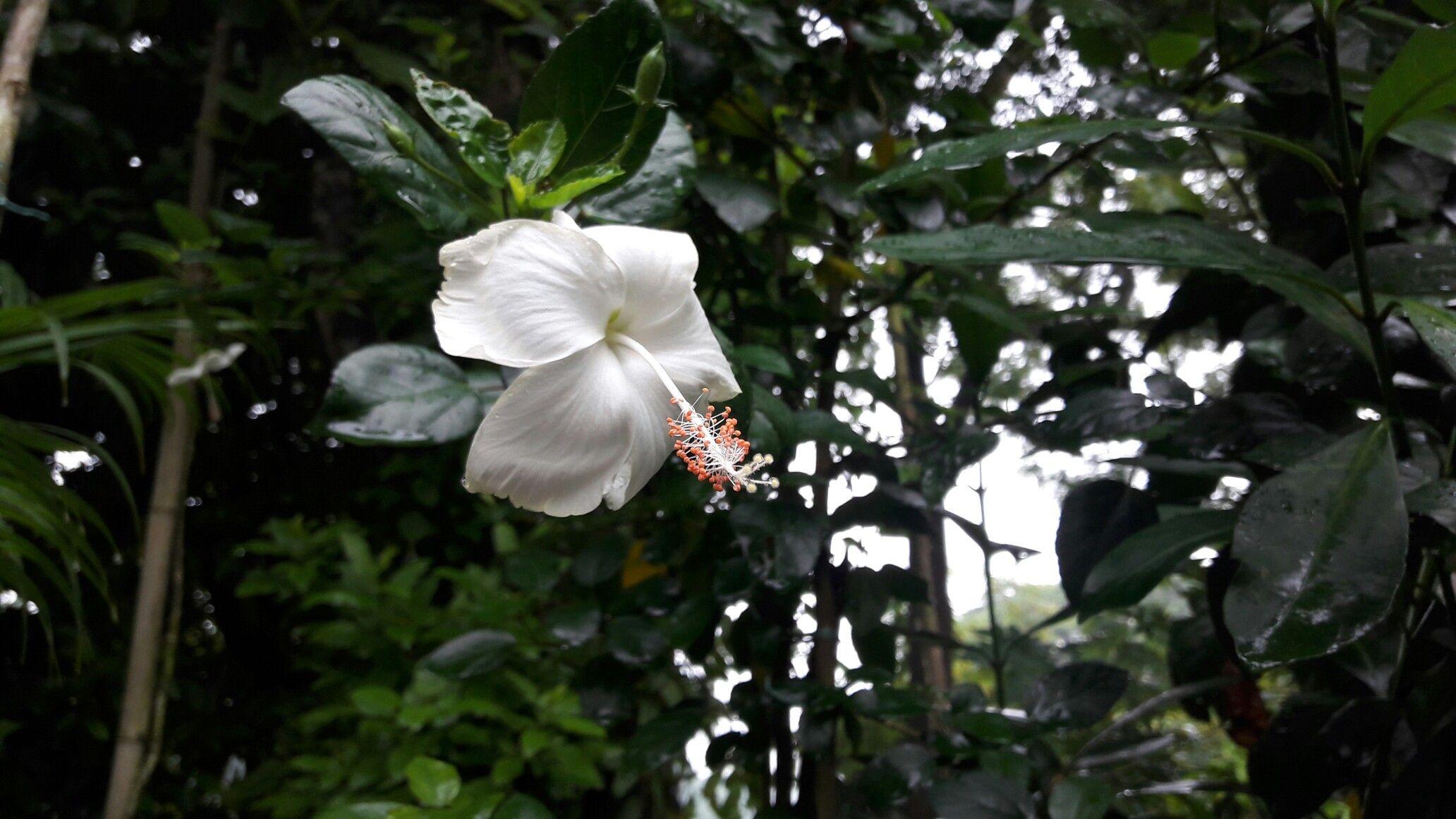 pin by jannatun nayeem on bangladesh 3 pinterest