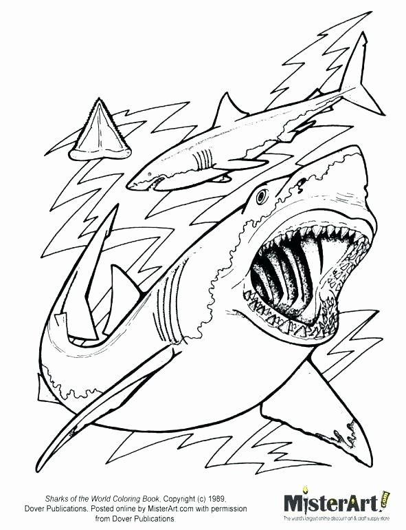 Megalodon Shark Coloring Pages New Great White Shark Coloring