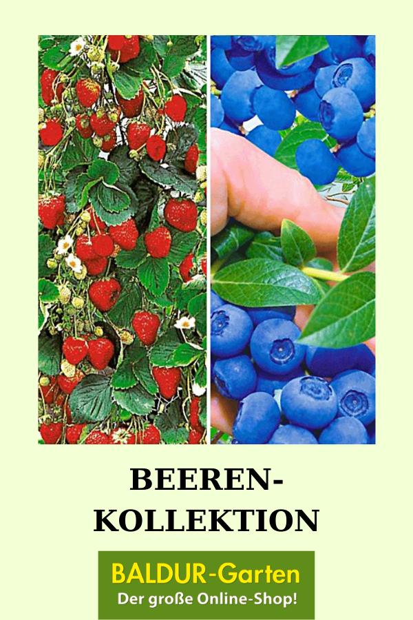 Beeren Kollektion Erdbeeren Bei Baldur Garten Erdbeeren Beeren Erdbeerpflanzen